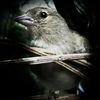 Tiere, Natur, Vogel, Makro