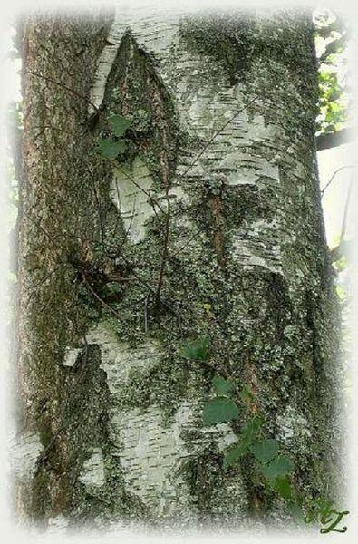 Baum, Wald, Rinde, Stamm, Holz, Fotografie