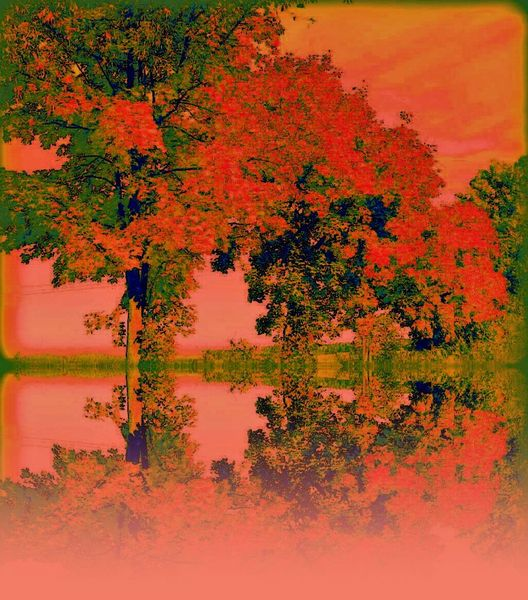 Abstrakt, Digital, Orange, Baum, Fotografie, Extrem