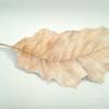 Herbst, Natur, Blätter, Zeichnungen