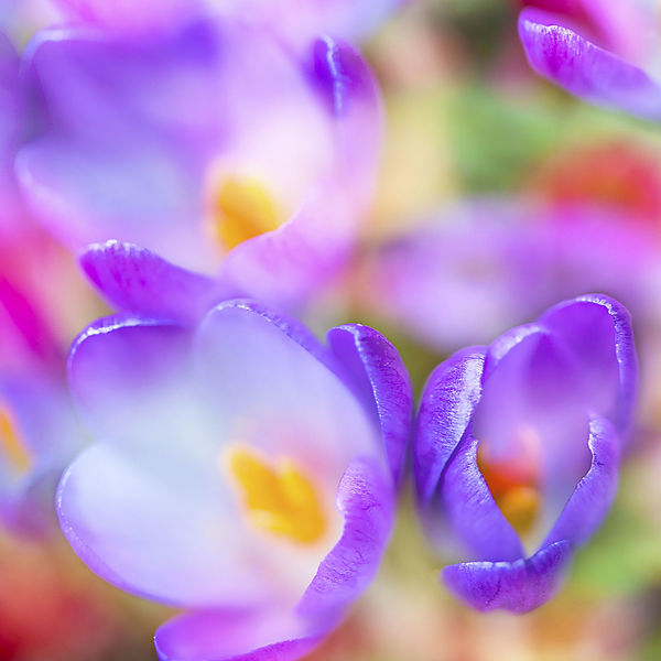Frühling, Blumen, Fotografie