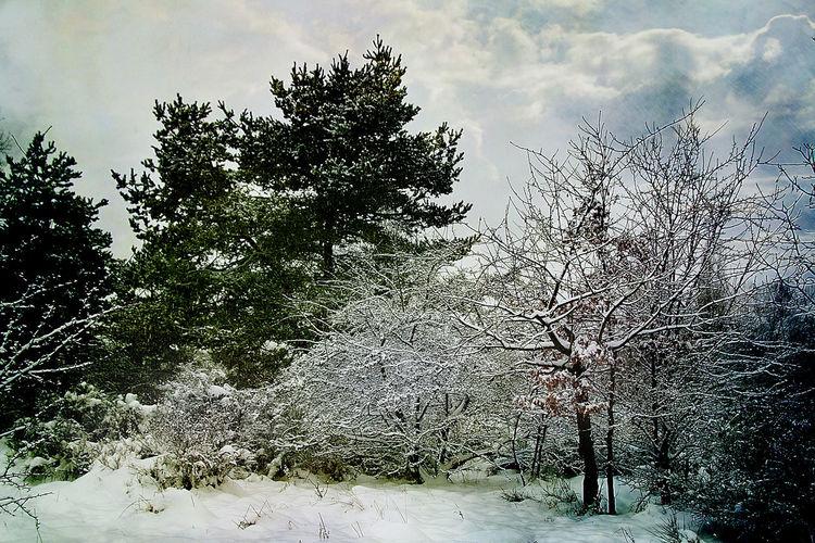 Winter, Fotografie, Winterlandschaft