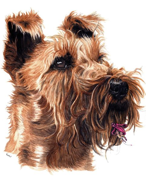 Hund, Irish terrier, Hundekopf, Portrait, Illustrationen, Tiere