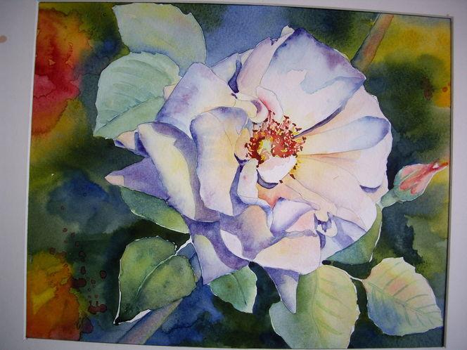 Aquarell, Rose
