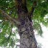 Baum, Wurzel, Äste, Fotografie