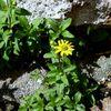 Stein, Pflanzen, Blumen, Fotografie