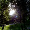 Sonne, Grün, Morgen, Wald