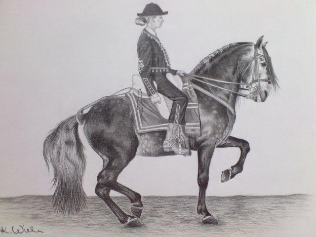 Zeichnungen, Pferde