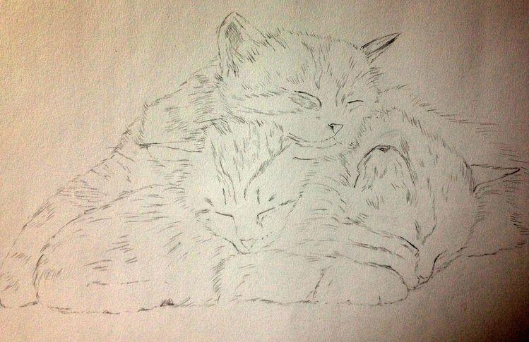 Katzenportrait, Dreamteam, Bleistiftzeichnung, Skizze, Katzenzeichnung, Katze