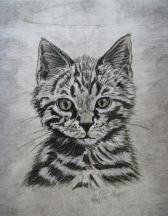 Portrait, Frechdachs, Katzenzeichnung, Zeichnung, Zeichnungen