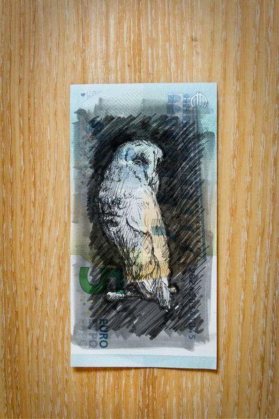 Eule, Bleistiftzeichnung, 5€, Illustration, Banknote, Illustrationen