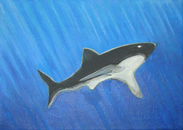 Hai, Weiß, Licht, Jaws, Tief, Wasser