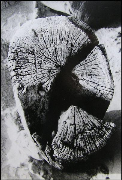 Holzpfahl Keil
