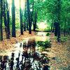 Wald, Natur, Wasser, Grün