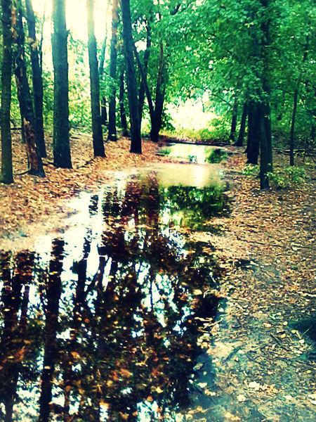 Grün, Spiegelung, Wald, Natur, Wasser, Fotografie