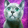 Katze, Katzenkopf, Grünauge, Malerei