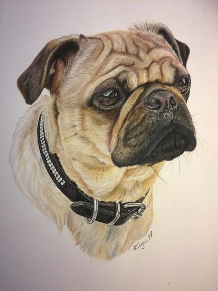 Tierportrait, Hund, Fotorealismus, Haustier, Naturalistisch, Kreide