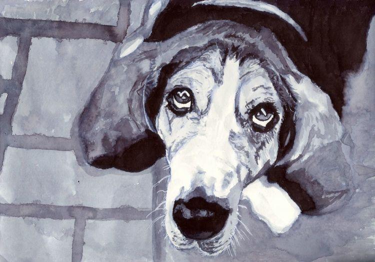 Beagle, Blick, Hund, Zeichnungen, Projekt, 2017