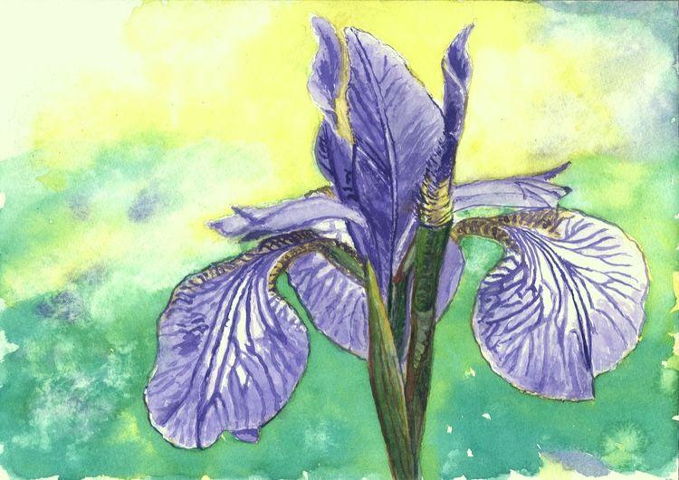 Iris, Blätter, Pflanzen, Blüte, Natur, Blumen