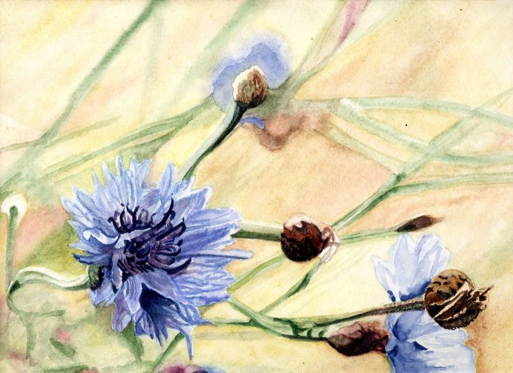 Blumen, Blüte, Korn, Aquarell