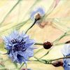 Blüte, Korn, Blumen, Aquarell