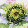Licht, Blumen, Sonne, Knospe