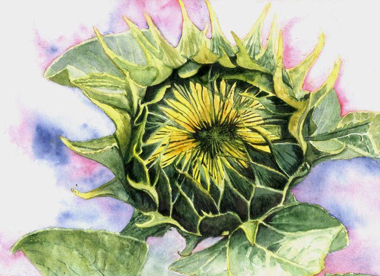 Pflanzen, Blumen, Licht, Sonne, Knospe, Aquarell