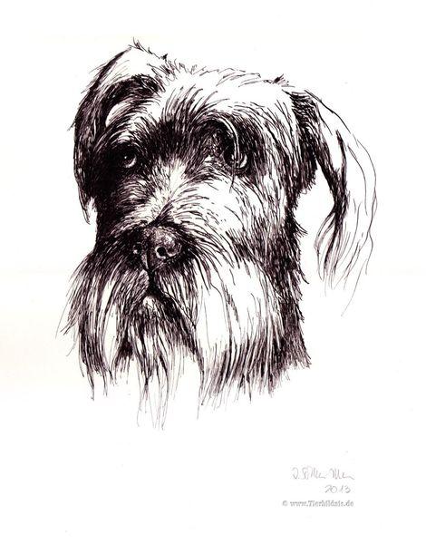 Realismus, Tierzeichnung, Bouvier, Tusche, Hundeportrait, Hundezeichnung