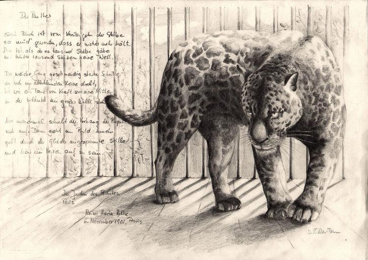 Katze, Zootier, Grafit, Rilkegedicht, Natur, Großkatze