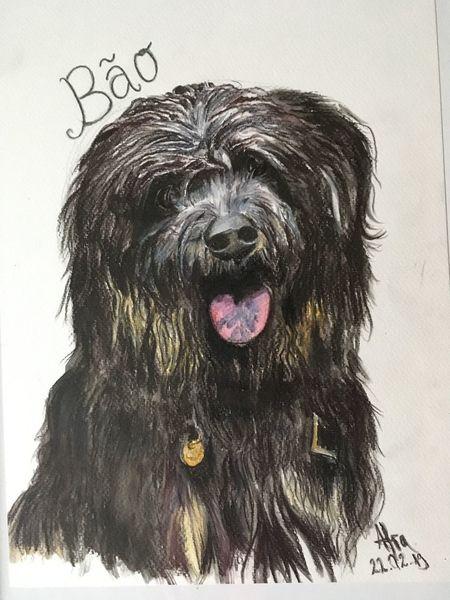 Portrait, Tiere, Aquarellmalerei, Hund, Aquarell