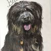 Portrait, Tiere, Aquarellmalerei, Hund