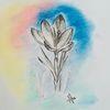 Bleistiftzeichnung, Natur, Frühling, Krokus