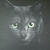Katze, Katzenaugen, Grün, Schwarz
