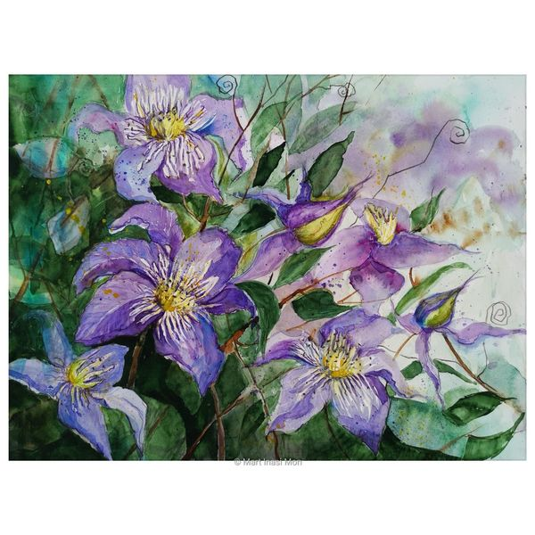 Clematis, Kletterpflanze, Aquarell
