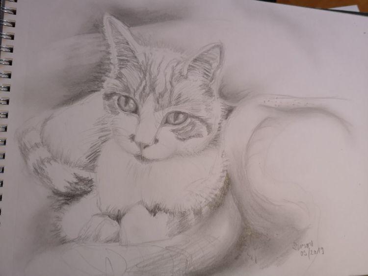 Katze, Bleistiftzeichnung, Kater, Zeichnungen, Skizze