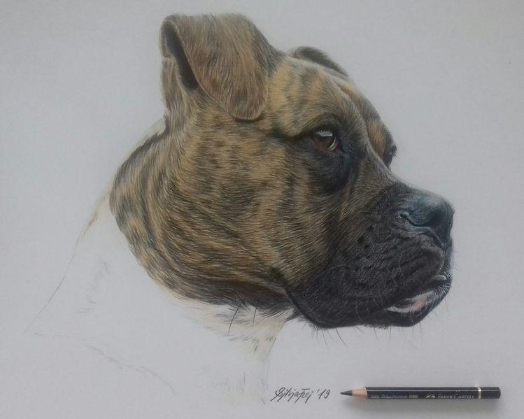 Tierzeichnung, Hund, Hundezeichnung, Zeichnungen, Wildtiere