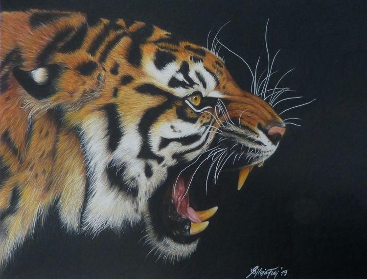 Zeichnung, Tiger, Tigerzeichnung, Zeichnungen, Wildtiere