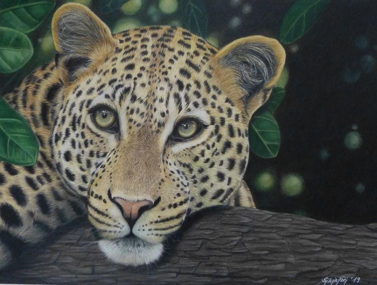 Leopard, Tierzeichnung, Zeichnungen, Wildtiere,