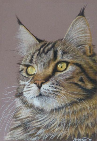 Pastell portrait, Maine coon, Katzenzeichnung, Zeichnungen