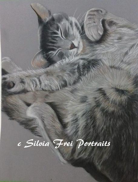 Tierportrait, Pastellmalerei, Zeichnung, Katzenportrait, Katze, Katzenzeichnung