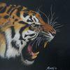 Tiger, Tigerzeichnung, Zeichnung, Zeichnungen