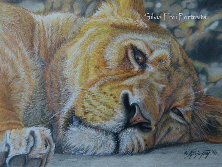 Afrika, Raubtier, Portrait, Großkatze, Zeichnung, Tierportrait