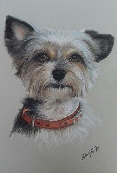 Tierportrait, Hund, Hundezeichnung, Künstlerfarbstifte, Terrier, Buntstiftzeichnung