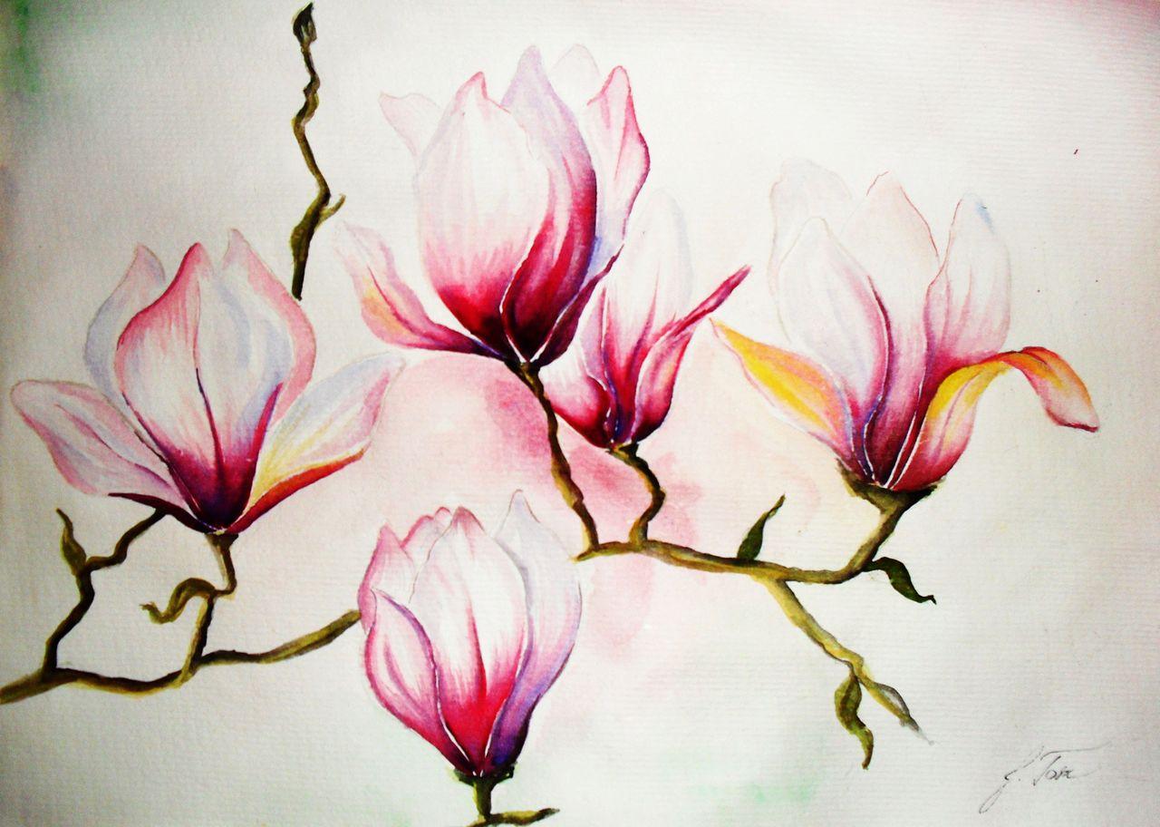 magnolien aquarellmalerei blumen pflanzen magnolien von jacqueline t bei kunstnet. Black Bedroom Furniture Sets. Home Design Ideas
