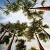 Himmel, Durchsicht, Baum, Stimmung
