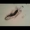 Feder tattoo vorlage, Zeichnungen, Feder