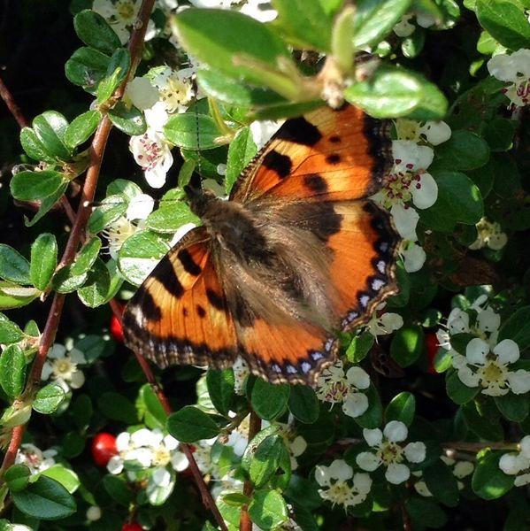Fotografie, Schmetterling