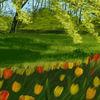 Wiese, Grün, Frühling, Bunt