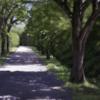 Frühling, Sonne, Allee, Waldweg