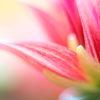 Blüte, Blumen, Blütenzart, Fotografie